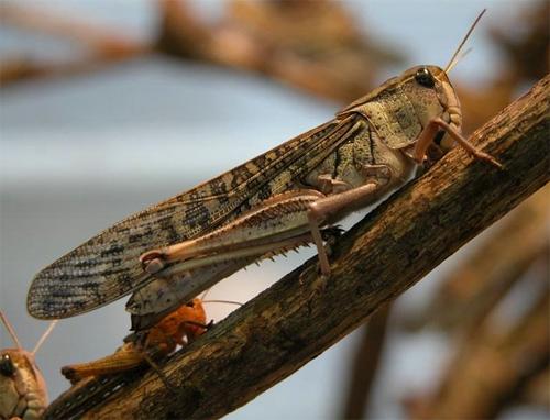 Quiz les insectes - Reconnaitre les insectes xylophages ...