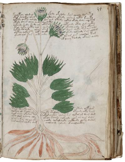 Le mystère du manuscrit de Voynich[/ Manuscrit_Voynich