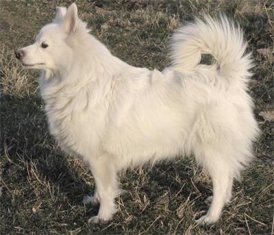 Quiz : les races de chiens - JeSuisCultive.com